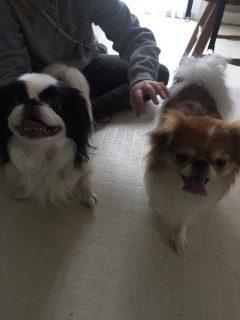 Rakki & Chibbi