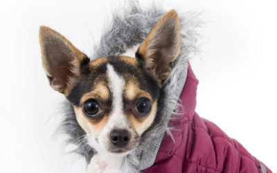 Is Your Dog Telling You It's Too Cold to go Outside – Maybe He Needs a Coat!