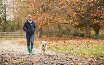 8 Unexpected Autumn Hazards Your Dog Needs You to Know About