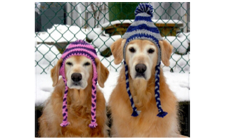 Beat Winter Boredom: 8 Fun Games To Play With Your Pup This Winter