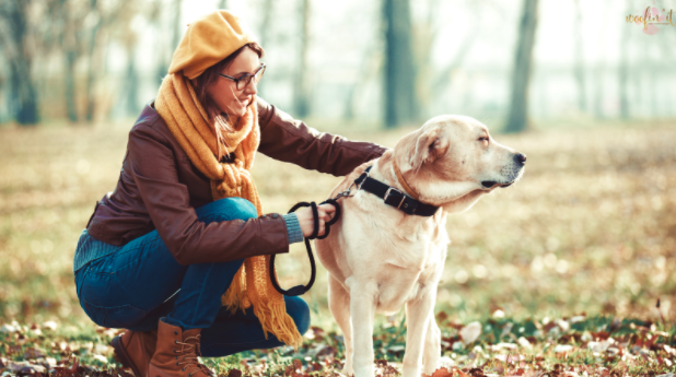 Best Dog Walking and Pet Care Services in Frederick, MD!