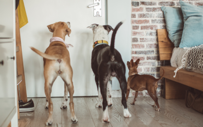 How To Choose An In-Home Dog Sitter In Frederick
