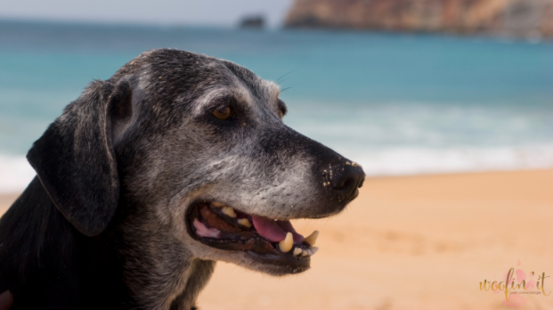 Senior Pet Month: Caring for Your Senior Pet at Home