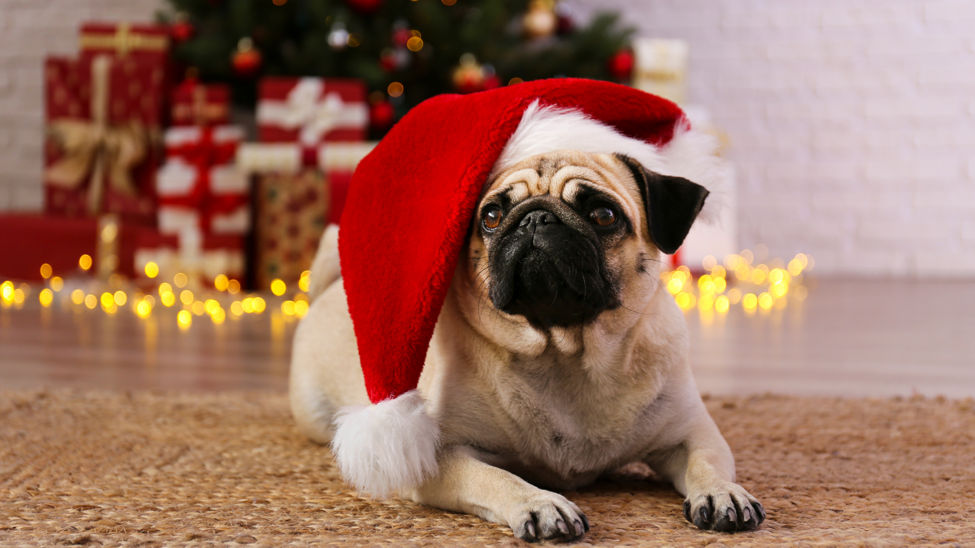 The Definitive Howliday Care Guide For Frederick Pets