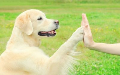 How to Teach Your Dog to Give High-Fives! And Other Fun Tricks