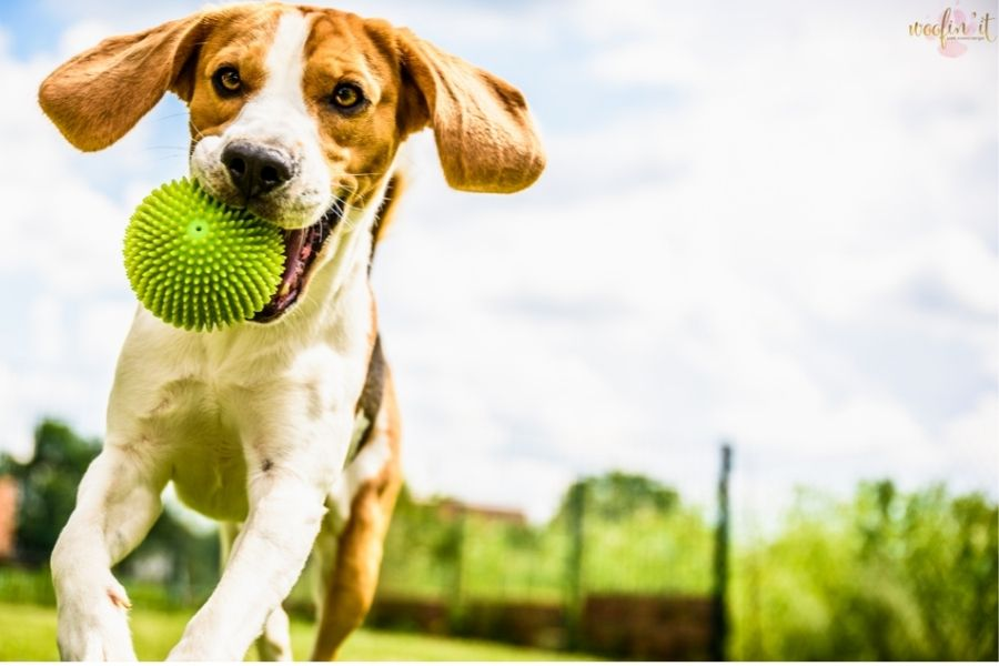 Is My Dog Happy? How to Give Your Pup a Happy, Healthy Life!