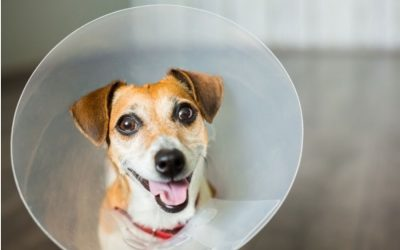 The Three Best Affordable Spay and Neuter Clinics in Frederick!