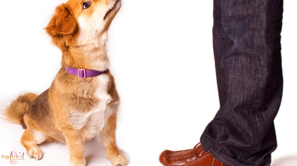 Animal Behavior Essentials – What You Need To Know About Fido!