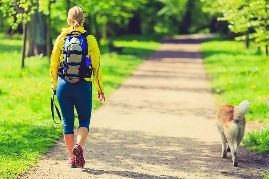 Summer Dog Walking Safety Tips in Frederick